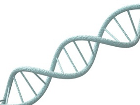 double-stranded-dna-helix.jpeg