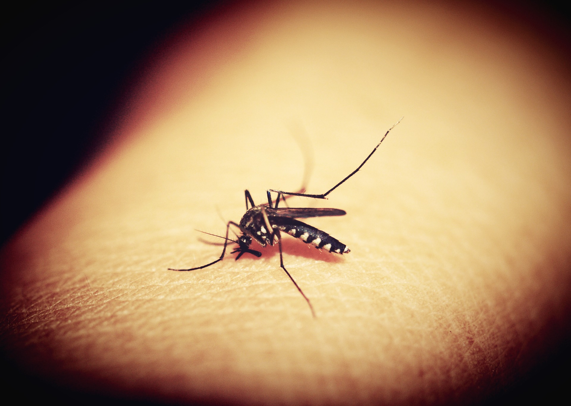 Malaria, the mosquito-borne disease, caused 212 million clinical episodes and 429,000 deaths in 2015.