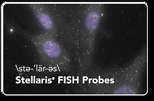 Stellaris RNA FISH