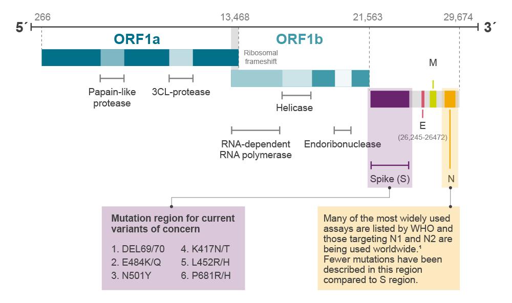 SARS-CoV-2_genome_aug21